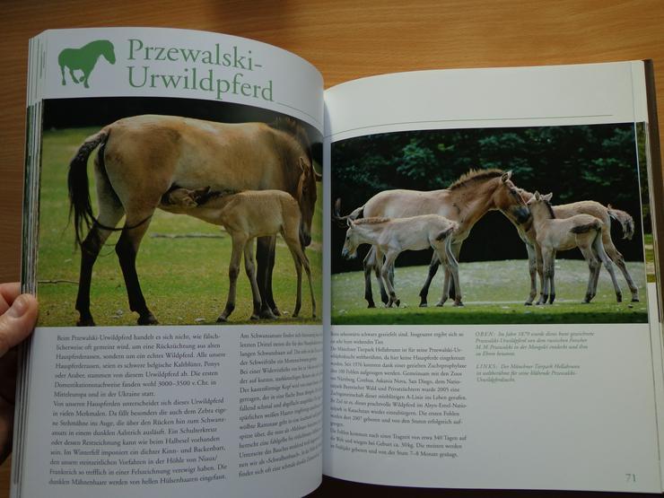 """Bild 13: Großbildband """"Tierkinder im Zoo"""", von Prof. Dr. Henning Wiesner, BLV-Verlag, NEU"""