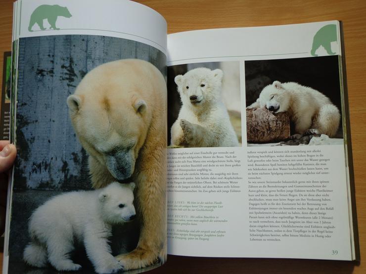 """Bild 8: Großbildband """"Tierkinder im Zoo"""", von Prof. Dr. Henning Wiesner, BLV-Verlag, NEU"""