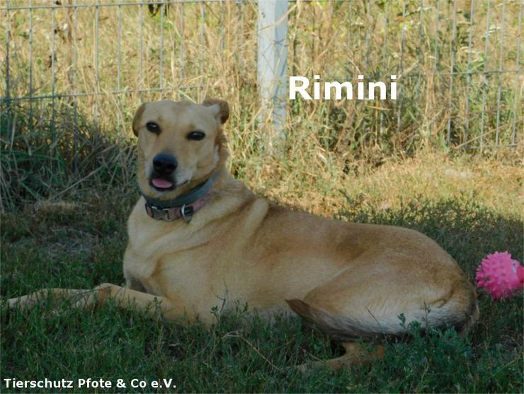 Rimini sucht ein zu Hause