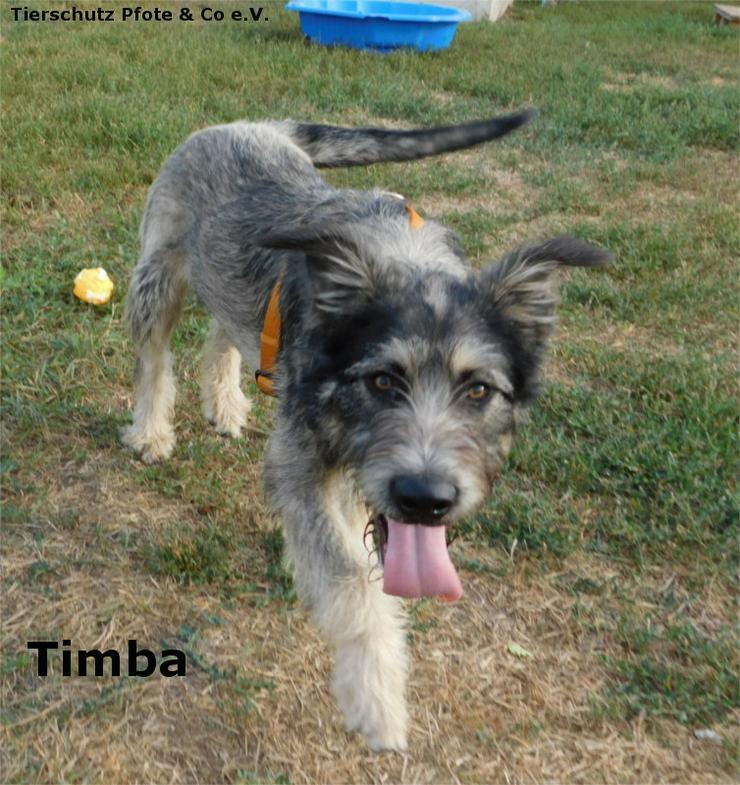 Timba sucht ein zu Hause