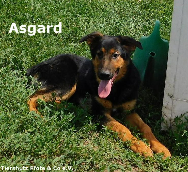 Asgard sucht ein zu Hause