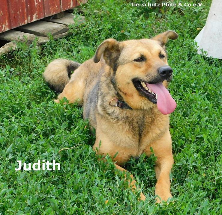Judit sucht ein zu Hause