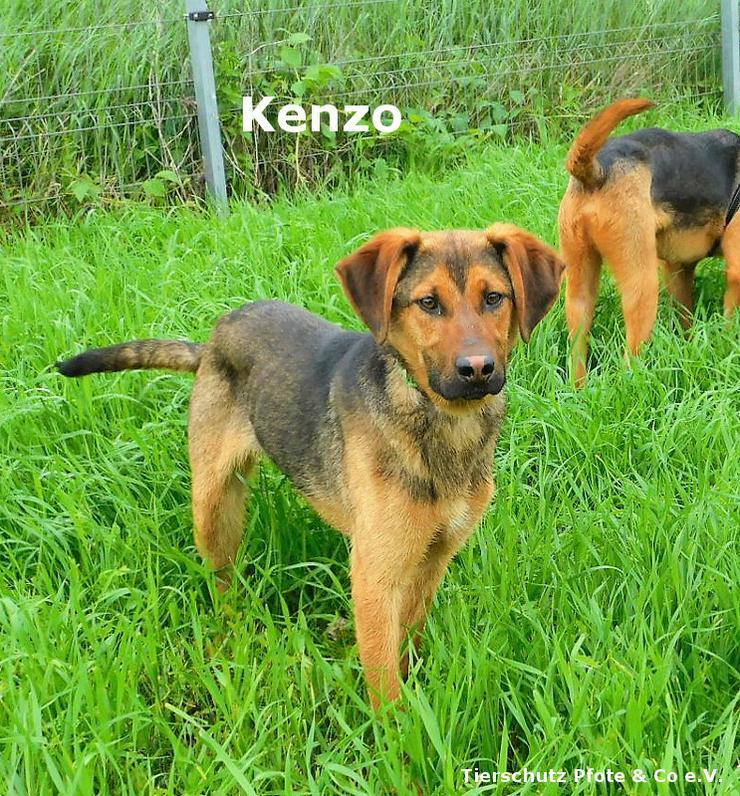 Kenzo sucht ein zu Hause