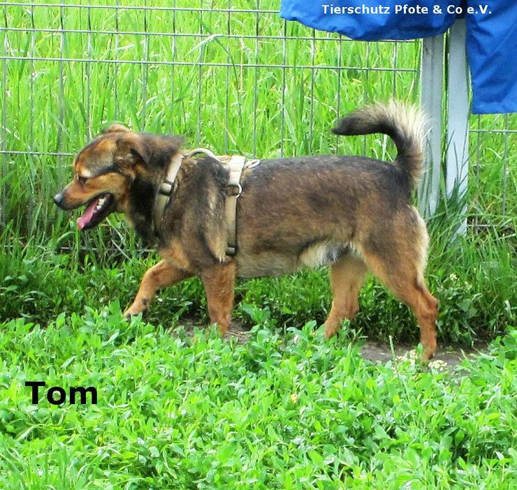Tom sucht ein zu Hause