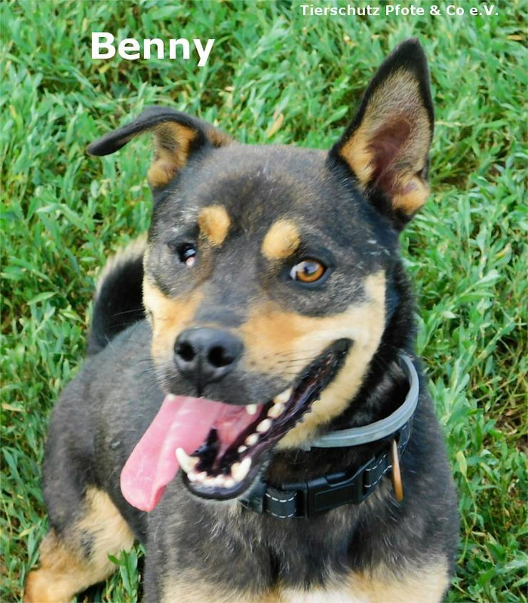 Benny sucht ein zu Hause