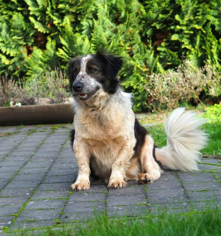 Smot, ein Schatz auf 4 Pfoten - Mischlingshunde - Bild 1