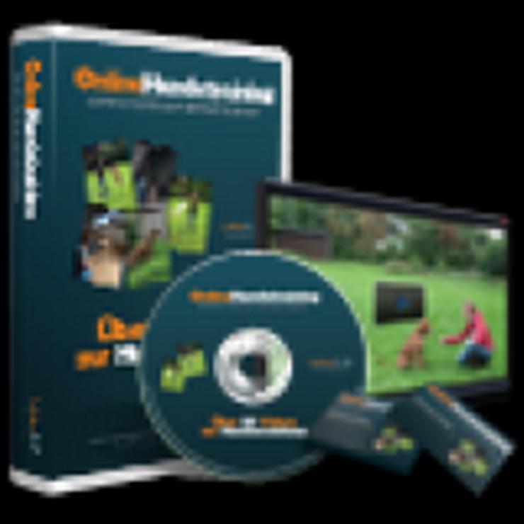 Wie Du Deinen Hund zu einem optimalen Begleiter erziehst! - Tierbetreuung & Training - Bild 1