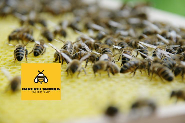 Bienen Patenschaft