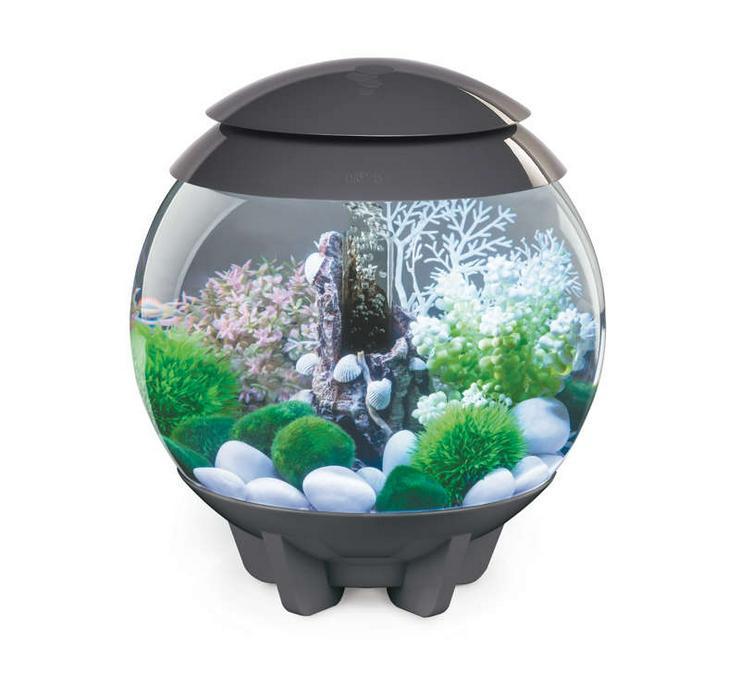 Aquarium mit Fischen und Deko abzugeben - Aquarien - Bild 1
