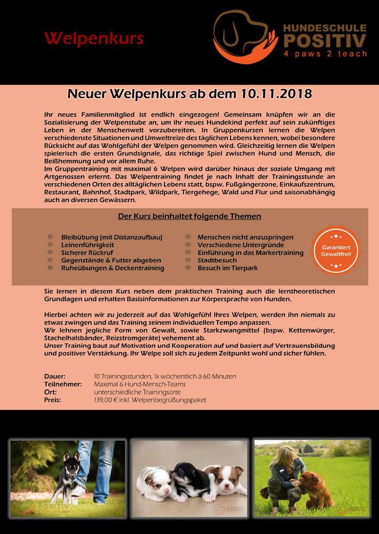 Welpenkurs ab 17.11.2018 Welpenschule Welpenstunde Hundeschule Hundetraining in Duisburg Moers Rheinberg Kamp-Lintfort Dinslaken Oberhausen Mülheim und Umgebung