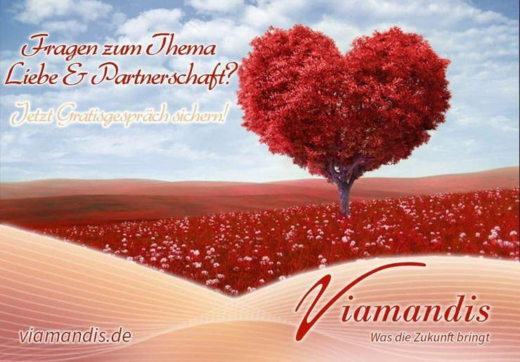 Viamandis - Jetzt 10 minütiges Gratisgespräch nutzen! - Liebe & Partnersuche - Bild 1