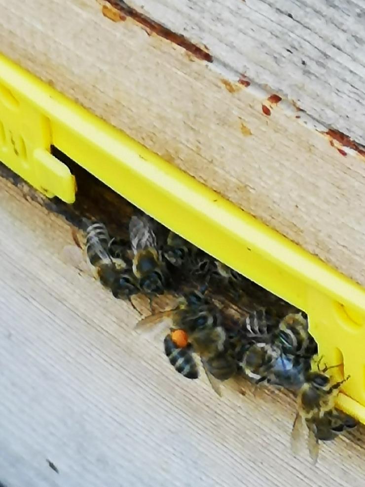 Honig aus dem Neißetal - Sonstige Spezialitäten - Bild 1