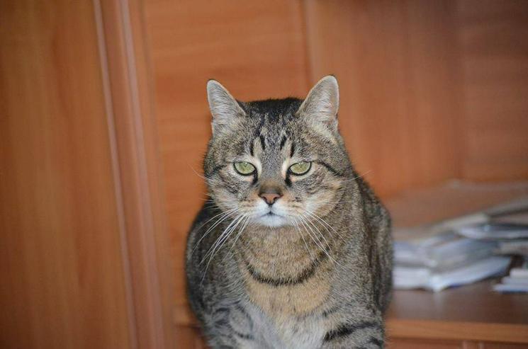 Mr. Misu (Kater aus dem Tierschutz) sucht ein Zuhause