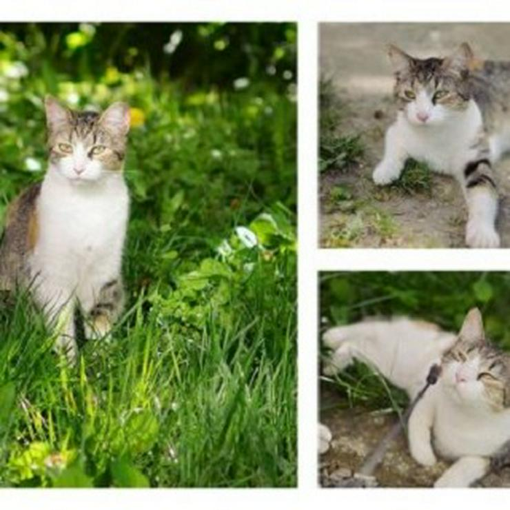 Nela (Katze aus dem Tierschutz) sucht ein Zuhause
