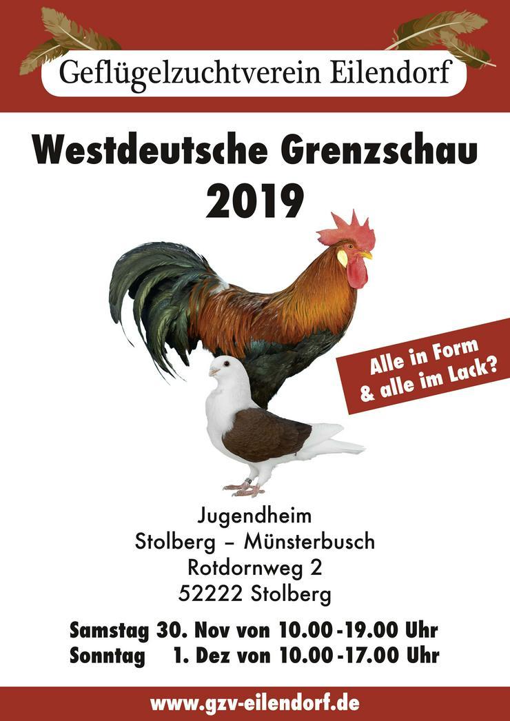 Geflügel Ausstellung GZV Aachen Eilendorf  - Hühner & Puten - Bild 1