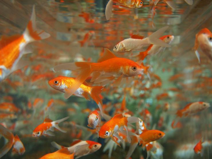 ich suche alle Aquarien und Teichbbewohner