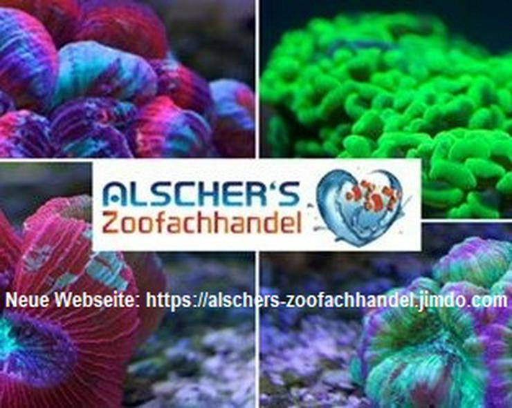 Bild 2: Kombipaket 2 Balling Lösungen Mineralien und Spurenelemente für Meerwasseraquarien