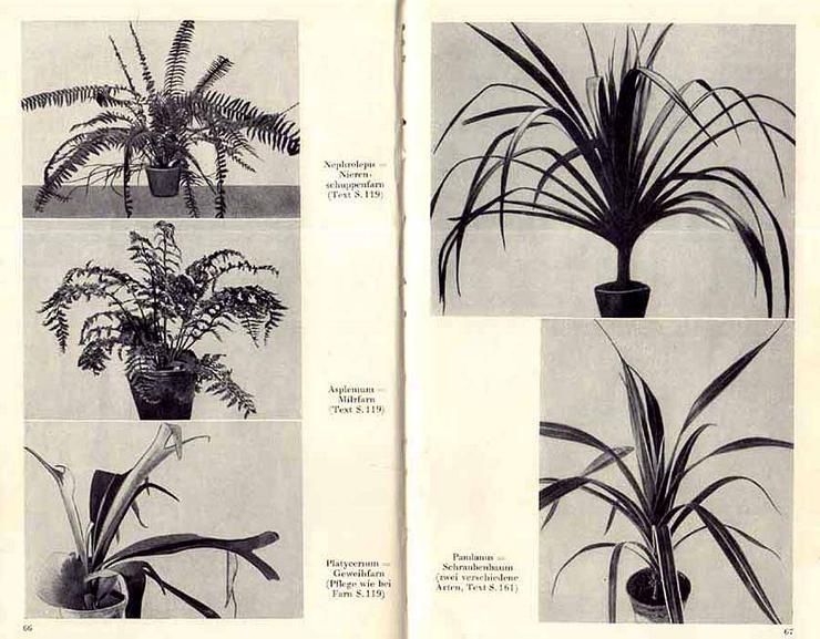 Bild 4: Buch von Hermann Holm - Zimmerpflanzen richtig pflegen - 1961