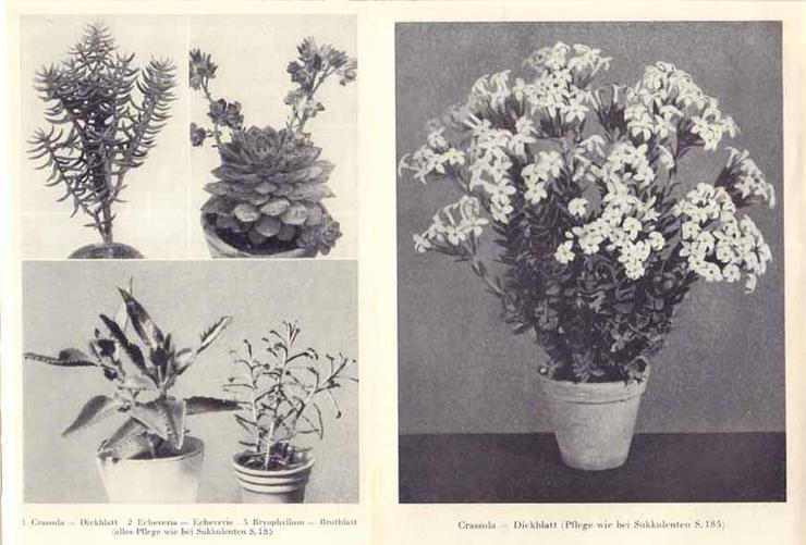 Bild 2: Buch von Hermann Holm - Zimmerpflanzen richtig pflegen - 1961