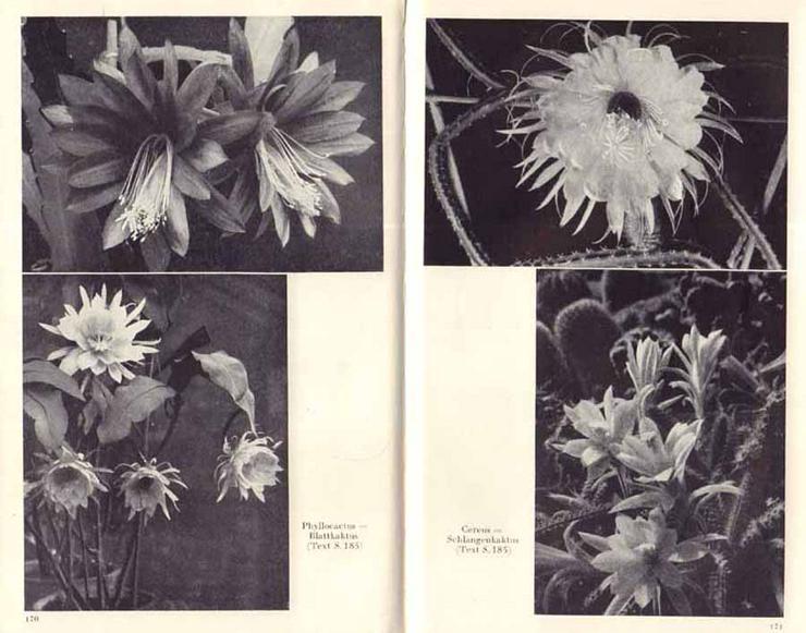 Bild 3: Buch von Hermann Holm - Zimmerpflanzen richtig pflegen - 1961