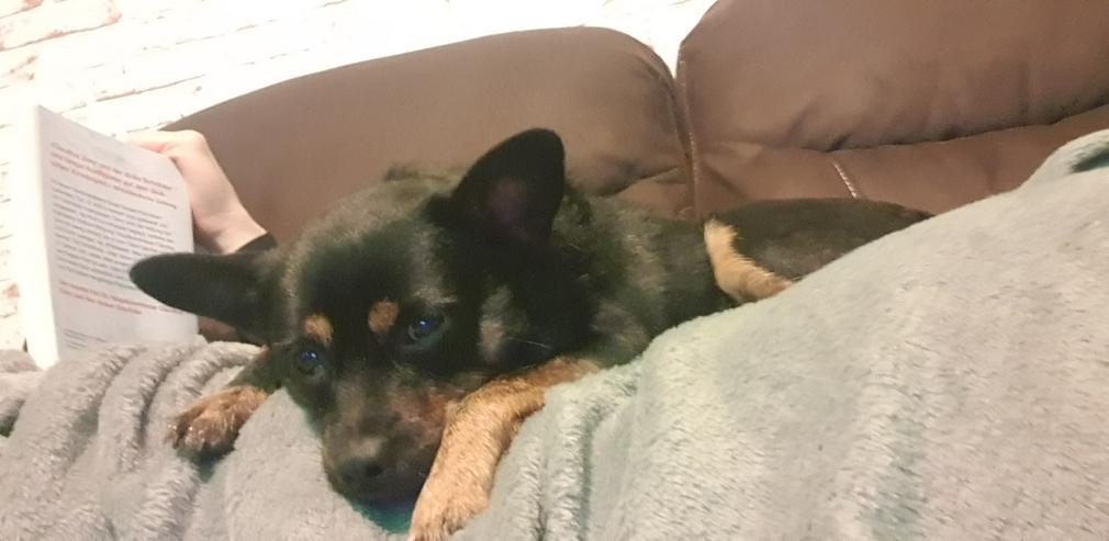 Bild 2: Süßer charmanter Hundejunge