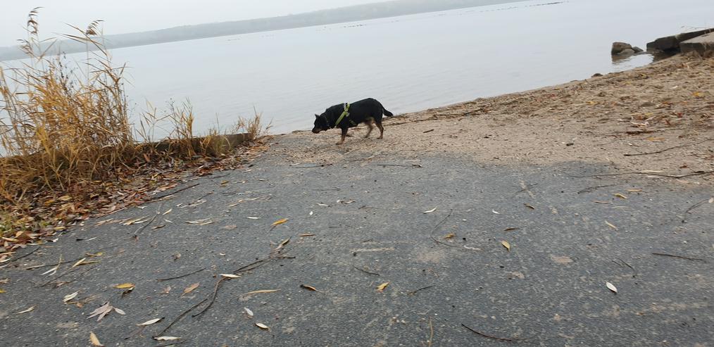 Bild 4: Süßer charmanter Hundejunge