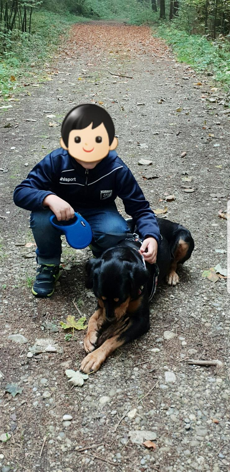 Bild 5: Lenny die liebe Hündin, besuchen und adoptieren!