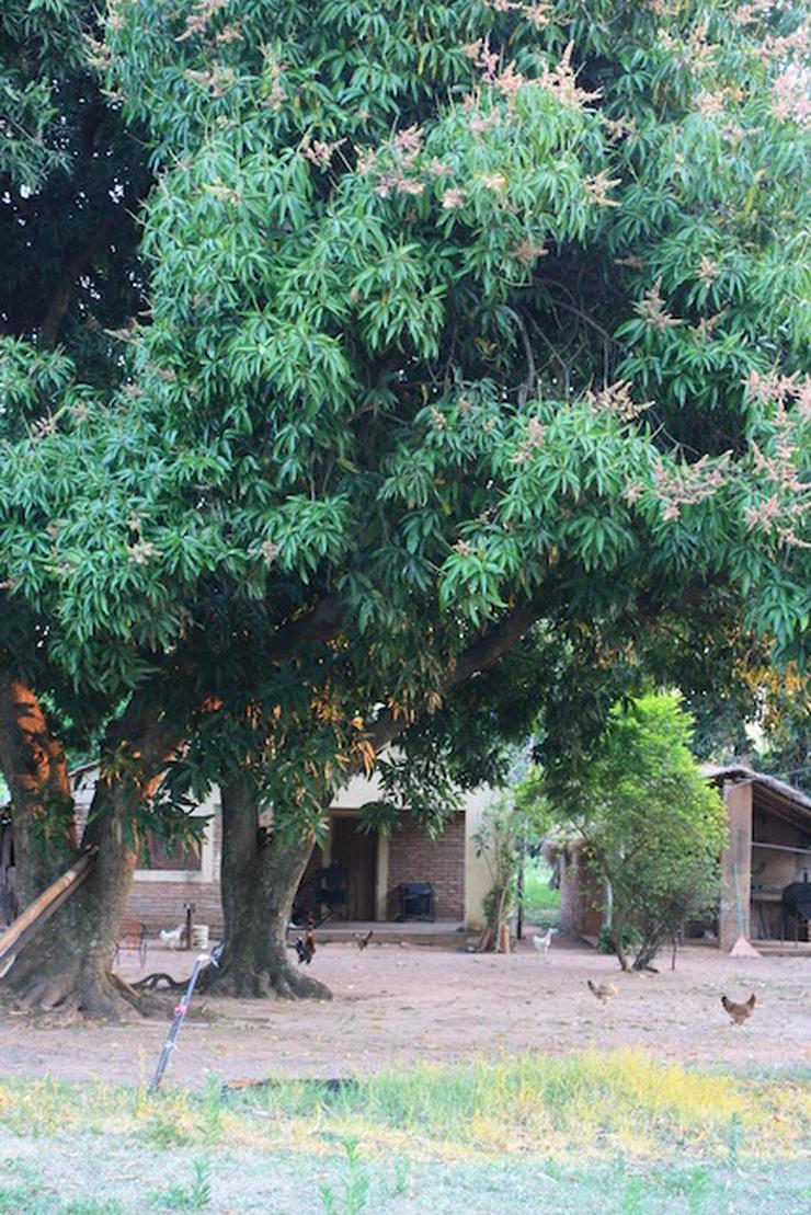 Bild 5: Grundstück in Paraguay