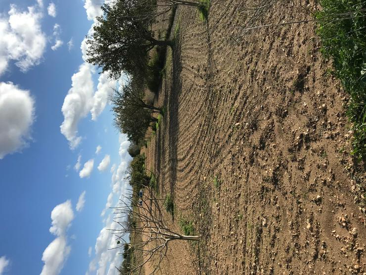 Mallorca Traum: Grundstück mit eigenem Brunnen im fruchtbarsten Gebiet