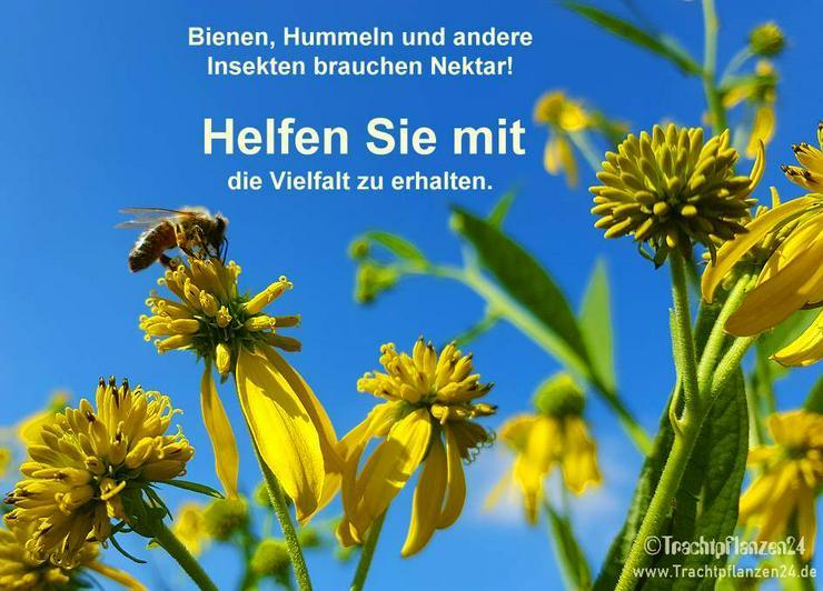 Saatgut für Bienen, Hummeln und Wildinsekten