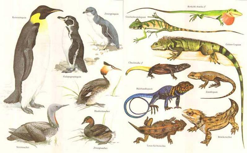 Bild 4: Das grosse Weltreich der Tiere - 2000 Tiere auf einen Blick - Philip Whitfield