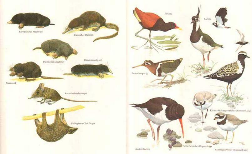 Bild 3: Das grosse Weltreich der Tiere - 2000 Tiere auf einen Blick - Philip Whitfield