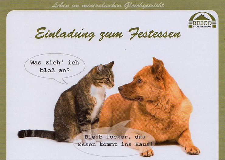 Einladung Ihrer Katze zum Test-, Festessen