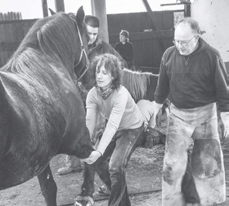 2 tägiger Intensiv Hufkurs in Oberlauringen (Pferde)