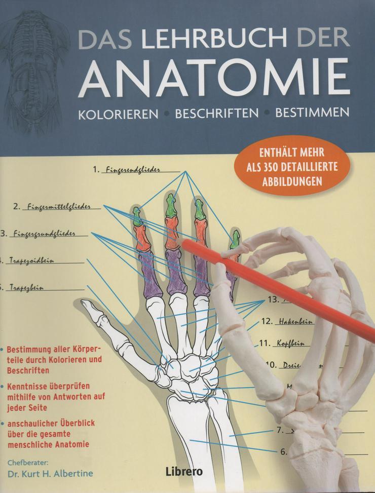 Anatomie Malbuch