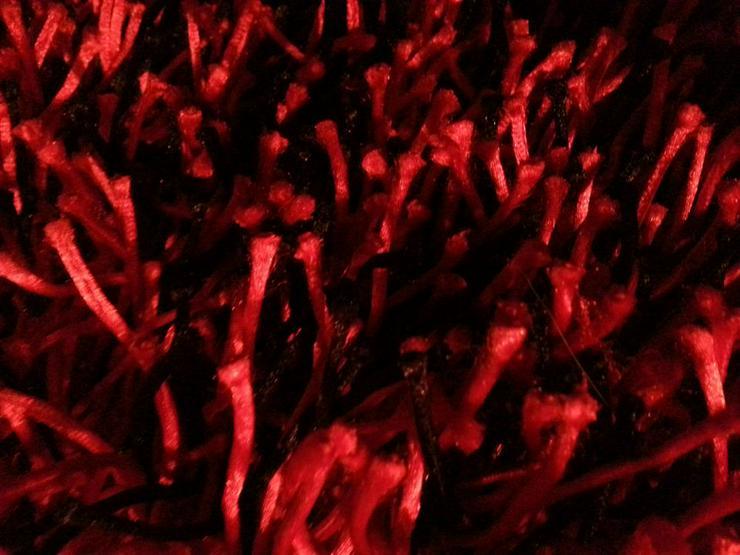 Teppich Rot (High Standard Quality - Teppiche - Bild 1