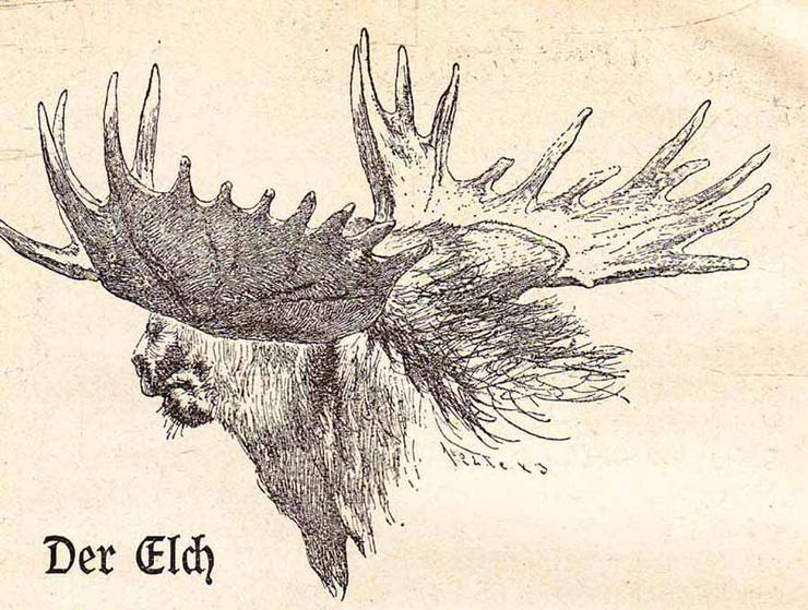 Bild 3: Buch von Dr. Kurt Floericke - Wisent und Elch - Zwei urige Recken