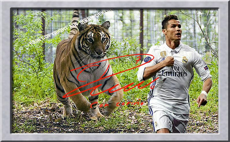 CRISTIANO RONALDO vom Tiger gejagt!