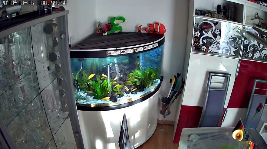Komplett Aquarium Fluval Venezia 350 Liter mit Schrank und Besatz - Aquarien - Bild 1