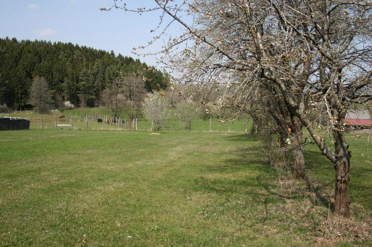 Bild 3: Streuobstwiese - Wiesengrundstück. Idyllische Hanglage mit Weitblick Preis VB