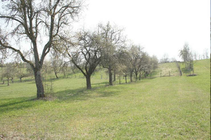 Bild 2: Streuobstwiese - Wiesengrundstück. Idyllische Hanglage mit Weitblick Preis VB