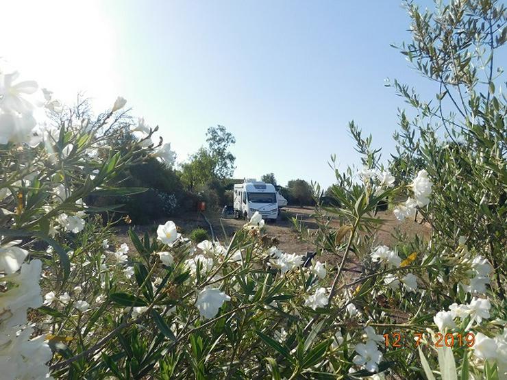 Bild 7: Mallorca Wohnwagen-Wohnmobilstellplätze zur Ferien- oder Langzeitmiete