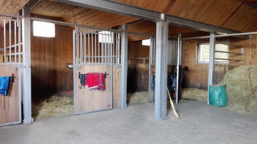 Pferdebox Vermietung