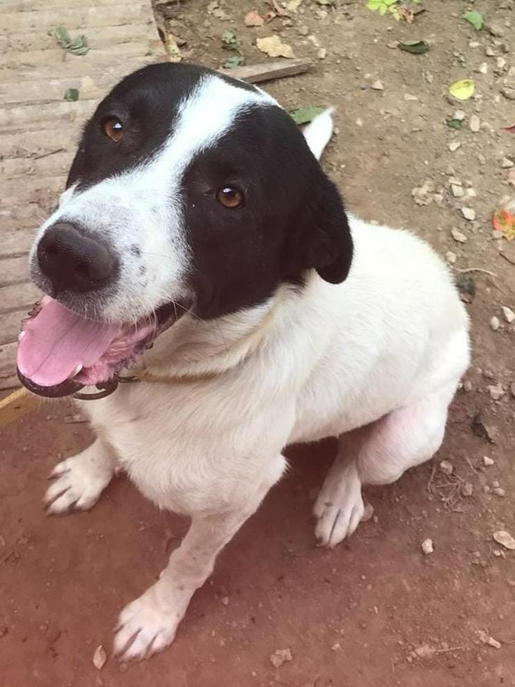 Suche liebevolles Körbchen auch als Zweithund  - Mischlingshunde - Bild 1