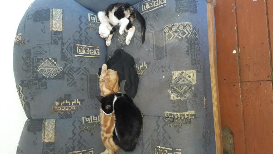 2 kleine Katzenkinder suchen neues Zuhause  - Mischlingskatzen - Bild 1