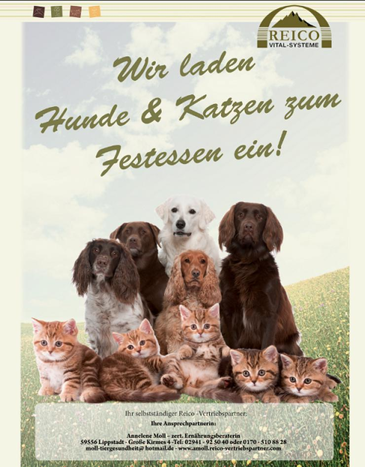 Futterberater-/in gesucht (Hund + Katze)