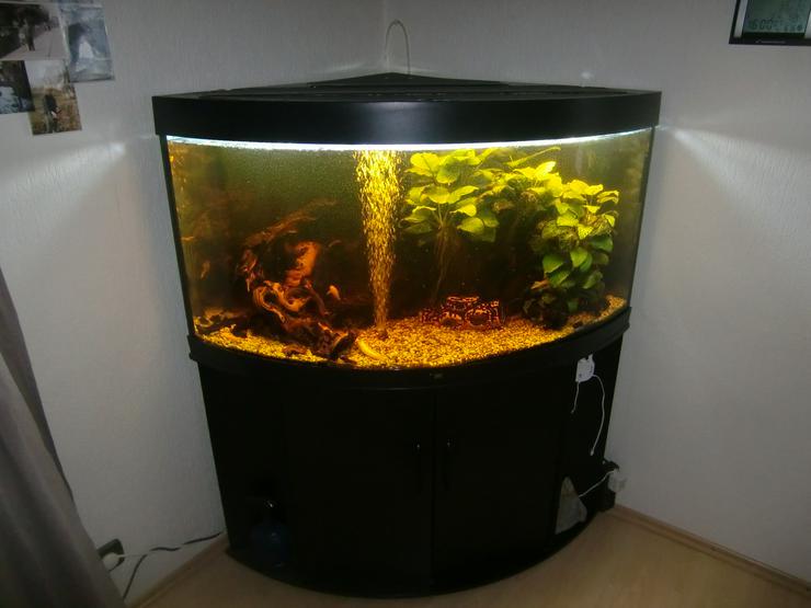 Aquarium 350 L. Juwel Trigon 350