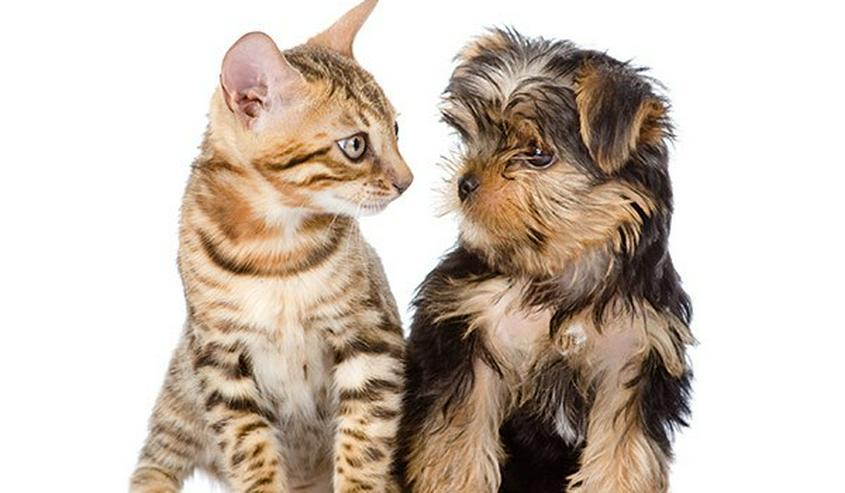 Kaltgepresstes Katzenfutter, Nassfutter,für Katzen & Kitten,Paket