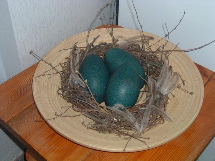 Bild 3: EMU Eier frisch