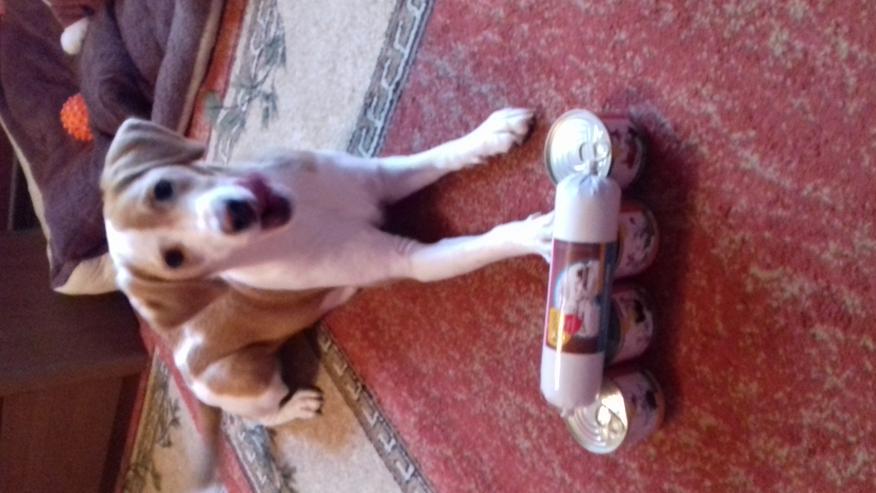 Anifit Hundefutter - Artgerechte und gesunde Ernährung - Futter & Näpfe - Bild 1